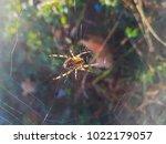european garden or diadem...   Shutterstock . vector #1022179057