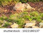 a plot of summer landscaped... | Shutterstock . vector #1022180137
