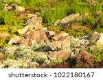 a plot of summer landscaped... | Shutterstock . vector #1022180167