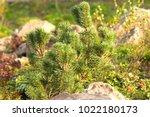 a plot of summer landscaped... | Shutterstock . vector #1022180173