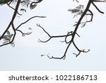 tree branches   outdoors | Shutterstock . vector #1022186713