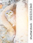owl stand on tree hole  natural ... | Shutterstock . vector #1022212363