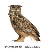 eurasian eagle owl  bubo bubo ... | Shutterstock . vector #102225337