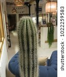 Small photo of MADRID, SPAIN - CIRCA OCTOBER 2017: interiors with cactus (Angiosperms Eudicots Caryophyllales Cactaceae) plant
