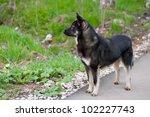 black dog standing on an... | Shutterstock . vector #102227743
