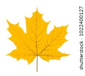 yellow autumn leaf isolated on... | Shutterstock .eps vector #1022400127