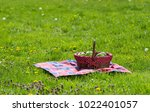 picnic basket and blanket | Shutterstock . vector #1022401057