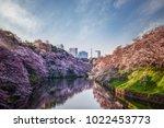 sakura or cherry blossom park... | Shutterstock . vector #1022453773