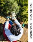 woman gardener transplanting...   Shutterstock . vector #1022539723