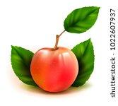 photo realistic peach 3d vector ... | Shutterstock .eps vector #1022607937