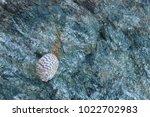 shells on gray stone  the sea... | Shutterstock . vector #1022702983
