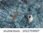 shells on gray stone  the sea... | Shutterstock . vector #1022703007