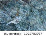 shells on gray stone  the sea... | Shutterstock . vector #1022703037