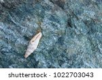 shells on gray stone  the sea... | Shutterstock . vector #1022703043