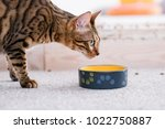 Stock photo healthy pet diet quality food and bowls cat dinner time beautiful bengal kitty 1022750887