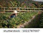 little girl keeps strawberry... | Shutterstock . vector #1022787007