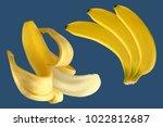 banana bunch. vector realistic... | Shutterstock .eps vector #1022812687