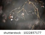 tree branch with mild focus. | Shutterstock . vector #1022857177