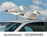 Seagulls Are Sitting On The...