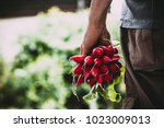 organic vegetables. farmers... | Shutterstock . vector #1023009013