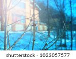 bare branches with swollen buds ... | Shutterstock . vector #1023057577