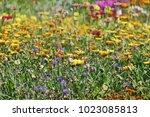 colorful flower glade. summer... | Shutterstock . vector #1023085813