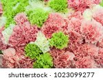 carnations pink and green... | Shutterstock . vector #1023099277