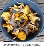 chanterelle and black trumpet... | Shutterstock . vector #1023149083