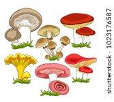 set of  natural mushrooms... | Shutterstock .eps vector #1023176587