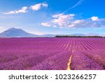 lavender flowers blooming... | Shutterstock . vector #1023266257