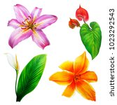 large different lilies and... | Shutterstock . vector #1023292543