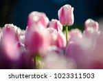 amazing nature concept of... | Shutterstock . vector #1023311503