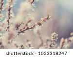 flowers of the cherry... | Shutterstock . vector #1023318247