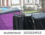 Squirrel On Bin