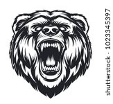 vector roaring bear isolated on ... | Shutterstock .eps vector #1023345397