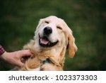 Stock photo close view of funny young happy labrador retriever smiling dog 1023373303
