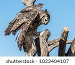 avian raptors in tucson arizona   Shutterstock . vector #1023404107