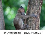 a cute monkey lives in a... | Shutterstock . vector #1023492523