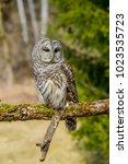 great horned owl | Shutterstock . vector #1023535723