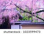 kyoto  japan   07 april 2017 ... | Shutterstock . vector #1023599473