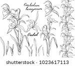 isolated orchid cimbidium on... | Shutterstock .eps vector #1023617113