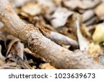 red or yellow ant that they... | Shutterstock . vector #1023639673