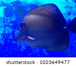 fish swimming under the sea | Shutterstock . vector #1023649477