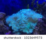 soft coral under the sea | Shutterstock . vector #1023649573