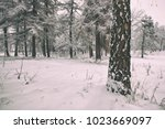 a winter park with trees... | Shutterstock . vector #1023669097