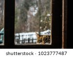 curious cat looking through the ... | Shutterstock . vector #1023777487