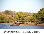 blur in south africa    kruger  ... | Shutterstock . vector #1023791893