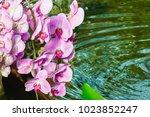 beautiful pink orchid flower... | Shutterstock . vector #1023852247
