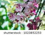 beautiful pink orchid flower... | Shutterstock . vector #1023852253