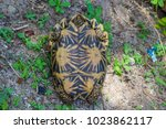 kinosternidae under shell ... | Shutterstock . vector #1023862117